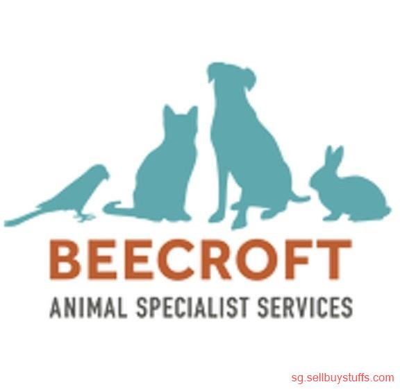 second hand/new: Surgical Veterinary Specialists & Animal clinic services in Singapore